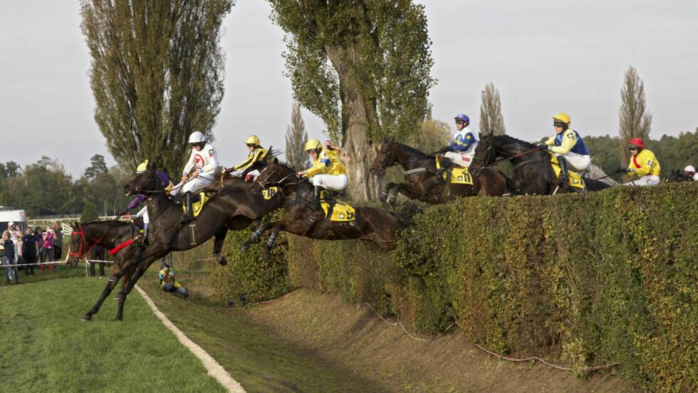 LIVSFARLIG: Hester og jockeyer i aksjon over det fryktede Taxisov prikop-hinderet i Velka Pardubicka-rittet. Spranget har kostet 24 hester livet siden oppstarten i 1874. Foto: Michal Novotny / NYT / NTB Scanpix