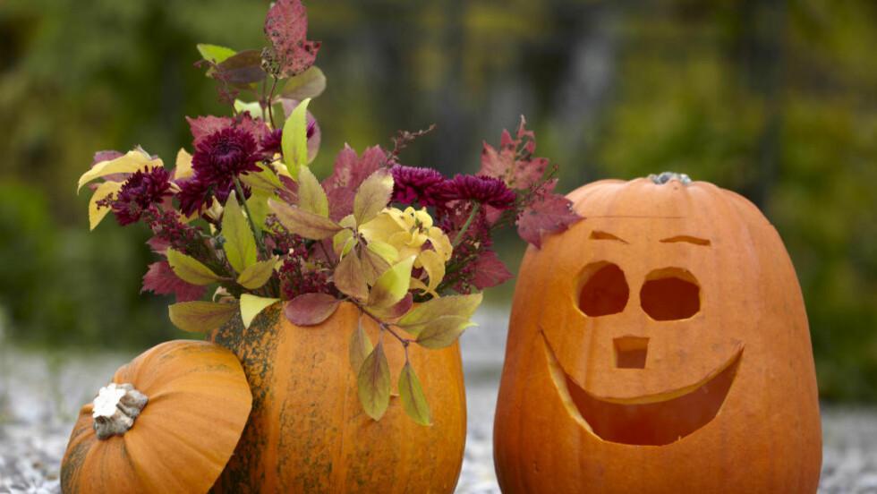 STORT SALG: Gresskar til halloween. Skikken har også fått skikkelig grunnfeste i Norge. Foto: All Over