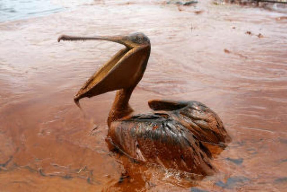ØDELEGGELSER: Oljekatastrofen sørget for enorme ødeleggelser i natur og lokalmiljø - men BP mener enkelte bedrifter overdriver kravene sine. Foto: Reuters / NTB scanpix