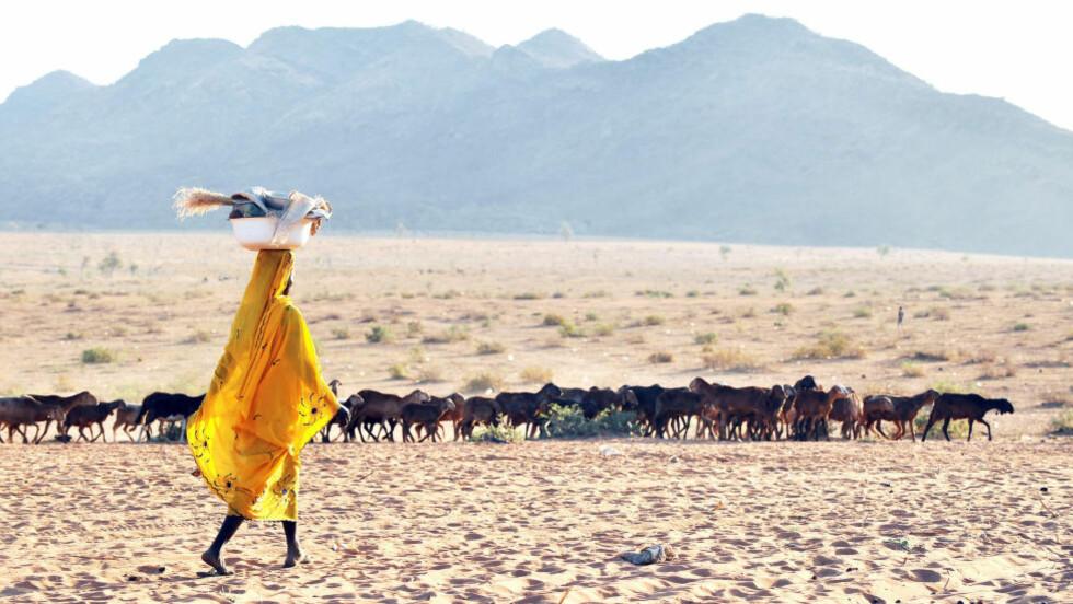 UTEN LEGEHJELP I TSJAD:  I Tsjad er forventet levealder kun 51 år, og de færreste har tilgang til legehjelp eller medisiner. Her gjeter en sudanesisk flyktning geiteflokken sin nær flyktningeleiren Djabal i det sørlige Chad. Foto: Philippe Hugen / AFP Photo / NTB Scanpix AFP PHOTO/PHILIPPE HUGUEN