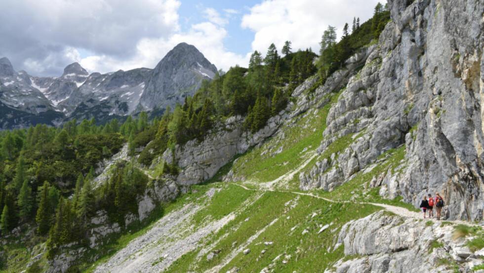 TROLLET: I det fjerne skimtes Triglav, som fra denne kanten bare har ett og ikke tre slemme hoder. Slovenias nasjonalsymbol er avbildet i riksvåpenet og på flagget. Det sies at man ikke er ekte slovener før man har vært på toppen av Triglav. Foto: RONNY FRIMANN OG TORILD MOLAND