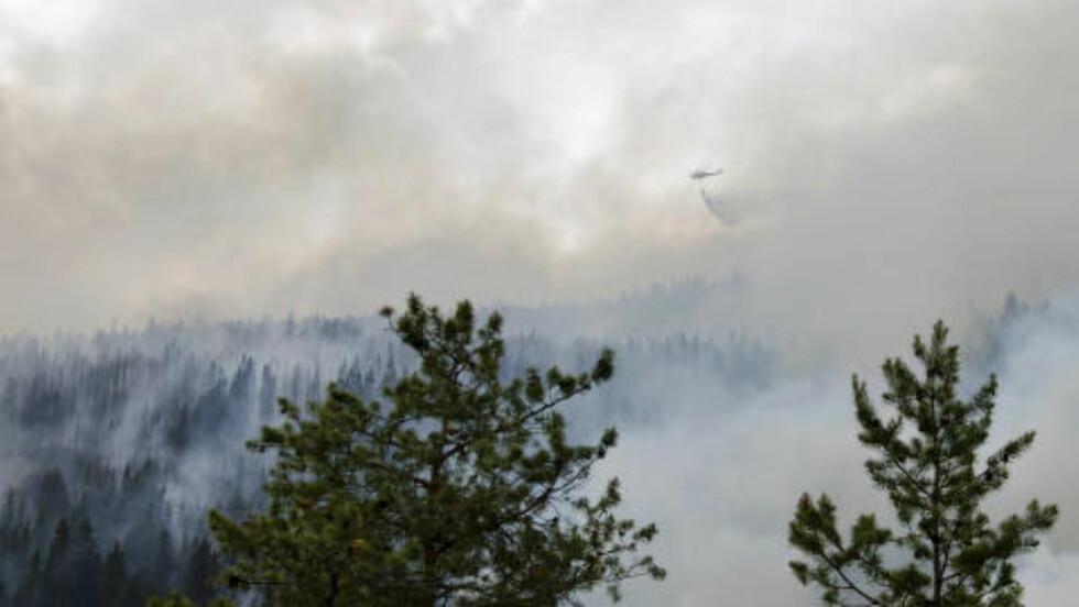 SKOGBRANN: Et brannhelikopter er satt inn for slukke en skogbrann mellom Sel og Brennhaug i Oppland. Et helikopter til er på vei fra Kjeller. Foto: Lasse Stadeløkken / NTB scanpix