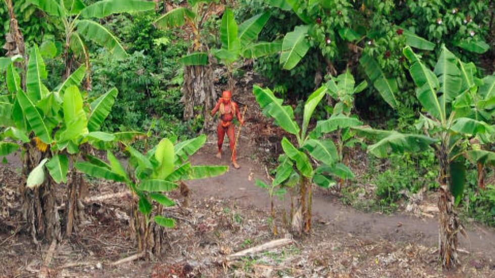 ALDRI KONTAKTET: Brasilianske myndigheter frykter for indianernes vilkår i Amazonas med stadig mer ulovlig hogst og narkotikatrafikk. Foto: AFP PHOTO/Gleison Miranda/FUNAI/Survival