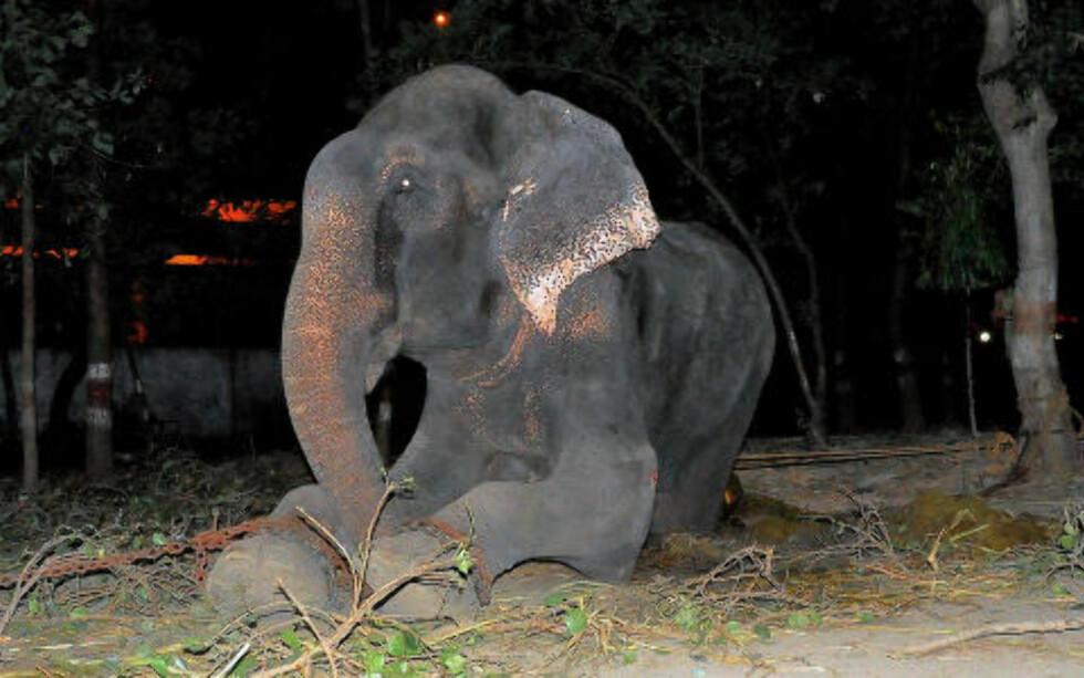 FANGET: Raju ble holdt i lenker og mishandlet i 50 år. Foto: Press People