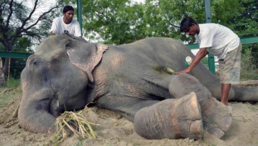 STELL OG KOS: Raju har funnet seg godt til rette på senteret for mishandlede dyr. Foto: Press People