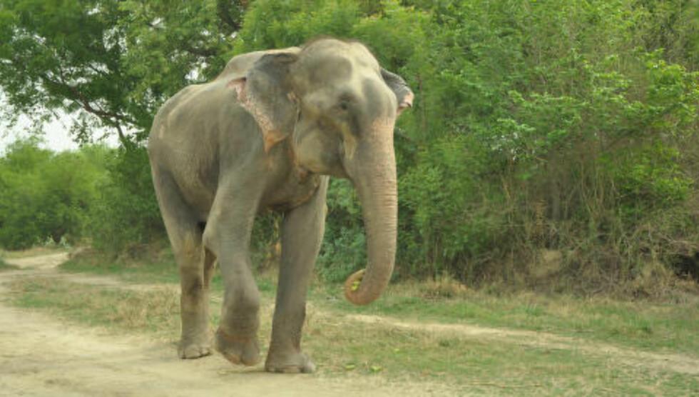 ENDELIG FRI: Raju er fremdeles underernært, men skal aldri mer gå med smertefulle nagler og lenker. Foto: Press People