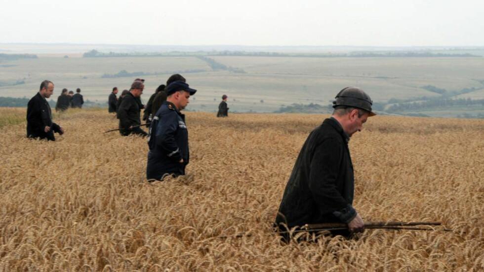 LETER ETTER OMKOMNE:  En gruppe ukrainske gruvearbeidere leter etter omkomne og vrakdeler i en kornåker i området der flyet med 298 mennesker om bord styrtet torsdag ettermiddag. Foto: Dominiqe Faget, AFP/NTB Scanpix.