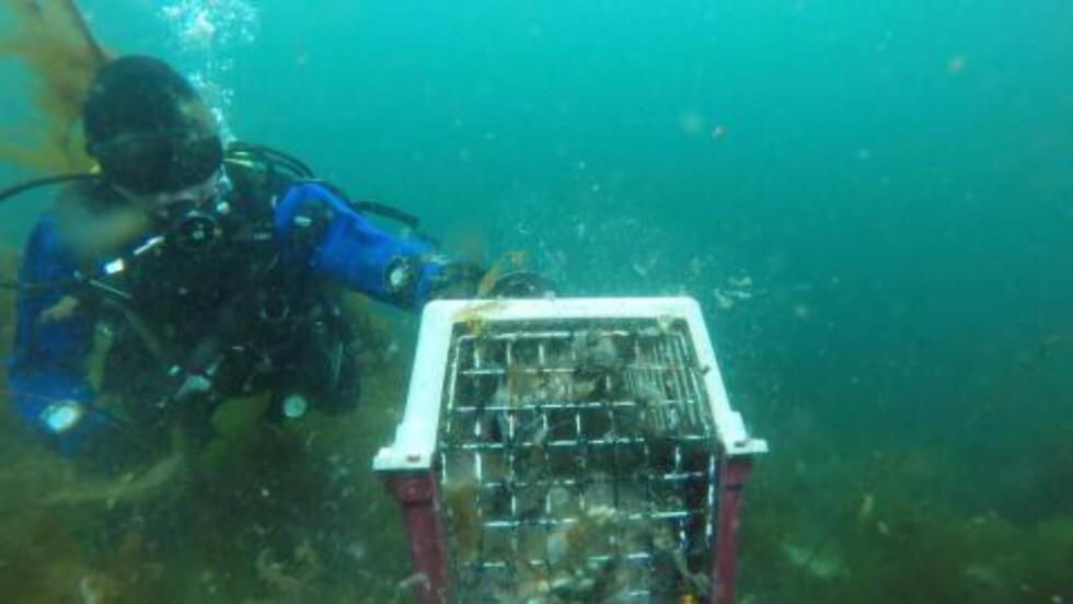 DRUKNET: Dette bildet viser da to dykkere fant en katt som var druknet i et bur ved brygga i Øygarden forrige uke. Foto: Espen Henriksen