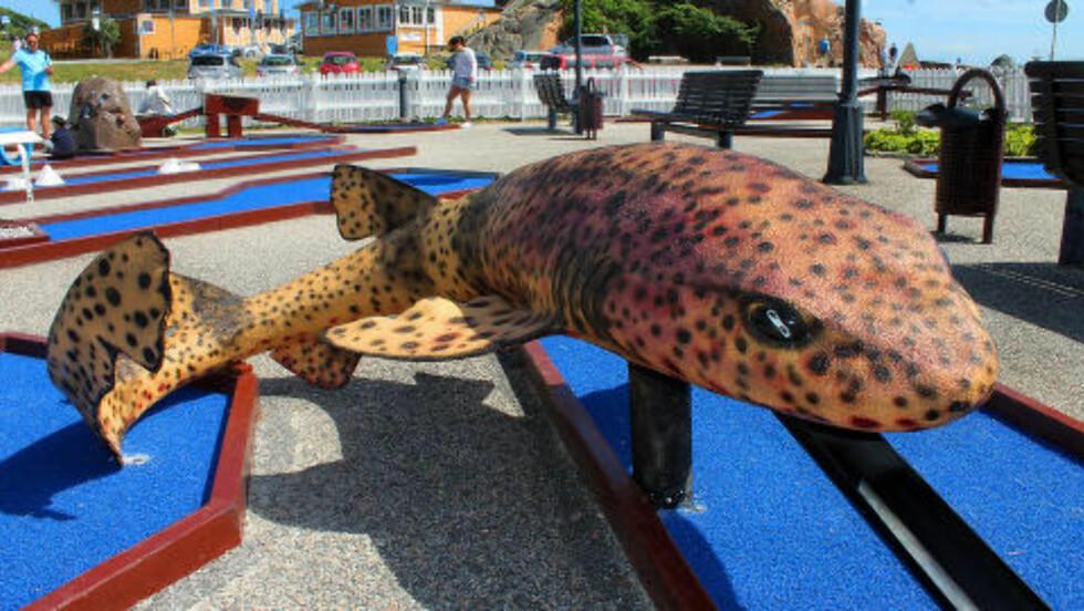 MINIGOLF:  Den nye minigolfbanen med tema hav har også en småflekket rødhai. Foto: KIRSTEN MARGRETHE BUZZI