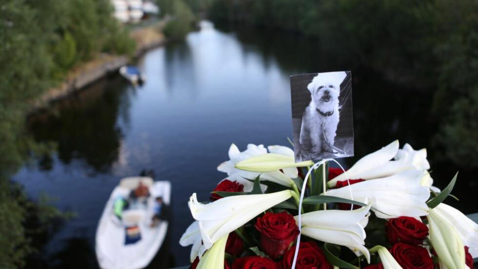 ENGASJEMENT: Lys og blomster er lagt på brua for å minnes hunden. Foto: Christian Roth Christensen / Dagbladet