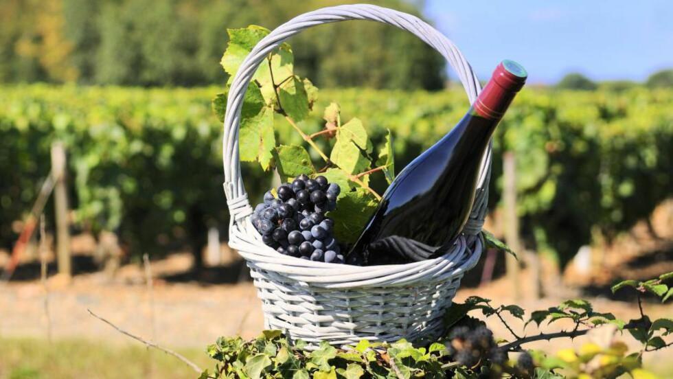 BALANSEKUNST: - Verdens beste viner når alt klaffer, og verdens mest overprisede og oppskrytte når man bommer, mener Robert Lie om vinene fra Burgund-regionen i Frankrike. Foto: COLOURBOX