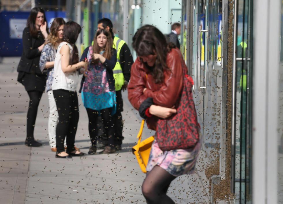 TO BEE OR NOT TO BEE: Biebanden okkuperte Topshop-butikken i London i dag og denne forbipasserende dama fikk ikke gå i fred. Foto: Philip Toscano / AP / NTB scanpix