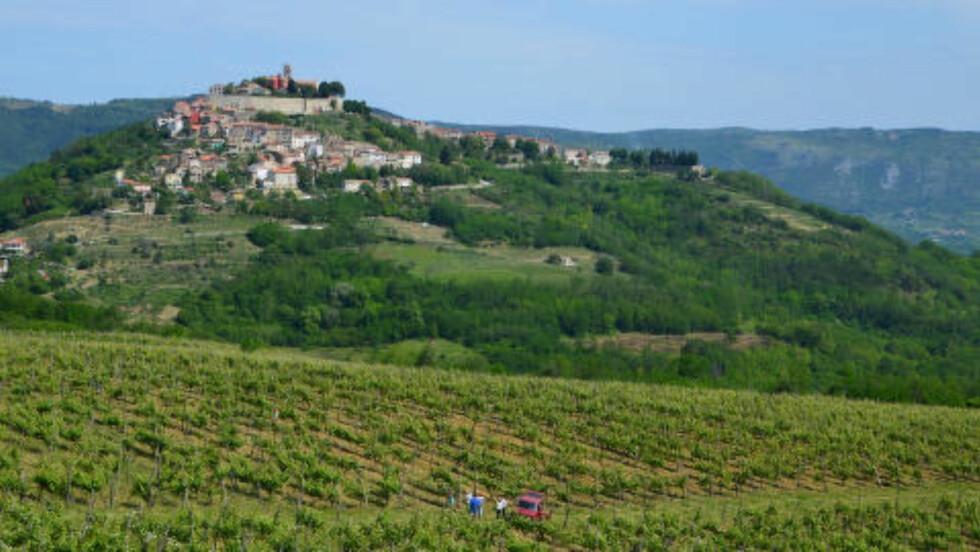 MALERISK: Motovun regnes som den aller vakreste av Istrias mange landsbyer, som gjerne er plassert på toppen av åsene. Foto: MARTE VEIMO