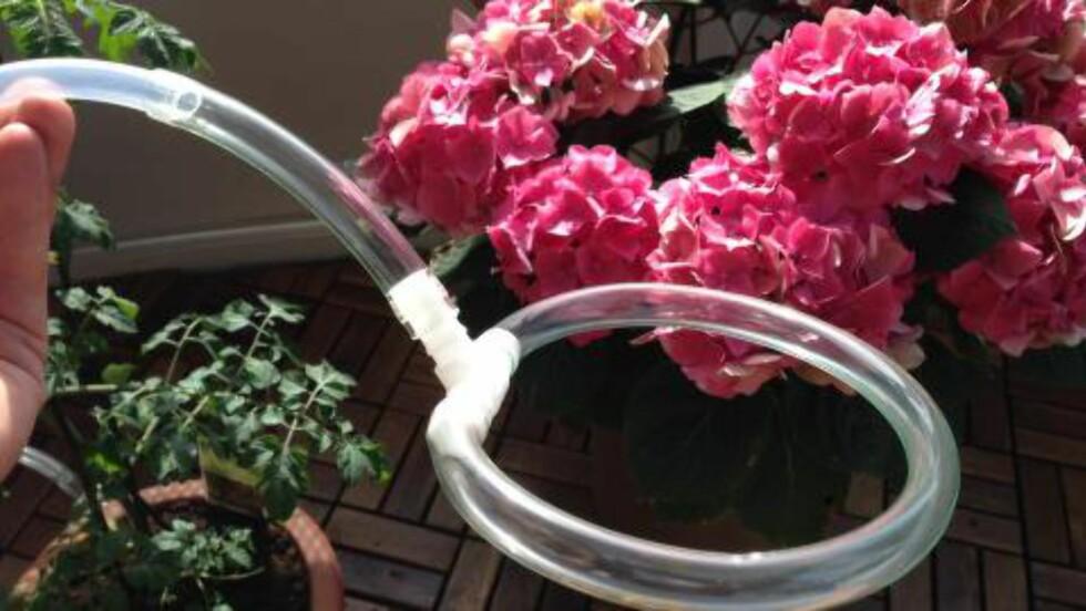 HULL: - For å fordele vann rundt i potter tok jeg en slange (12 mm) og koblet til et T-ledd. Denne ringen stakk jeg små hull på med en nål. Poenget er at den skal «svette» litt, men det skal ikke renne for fort.  Foto: PER ERVLAND / DINSIDE.NO
