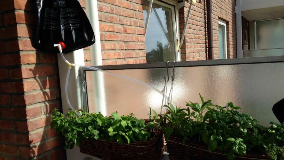 SMART: Kjøkkenhagen på balkongen får rikelig med væske, selv på varme dager i solveggen.  Foto: PER ERVLAND / DINSIDE.NO