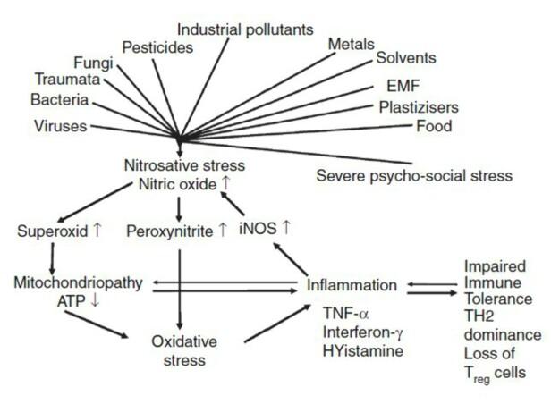 <strong>FIGUR 1:</strong> Standardmodellen for hvordan celleinflammasjon, mitokondrie-skader og nitrosativt stress skapes fra miljøfaktorer (her fra EUROPAEM 2016).