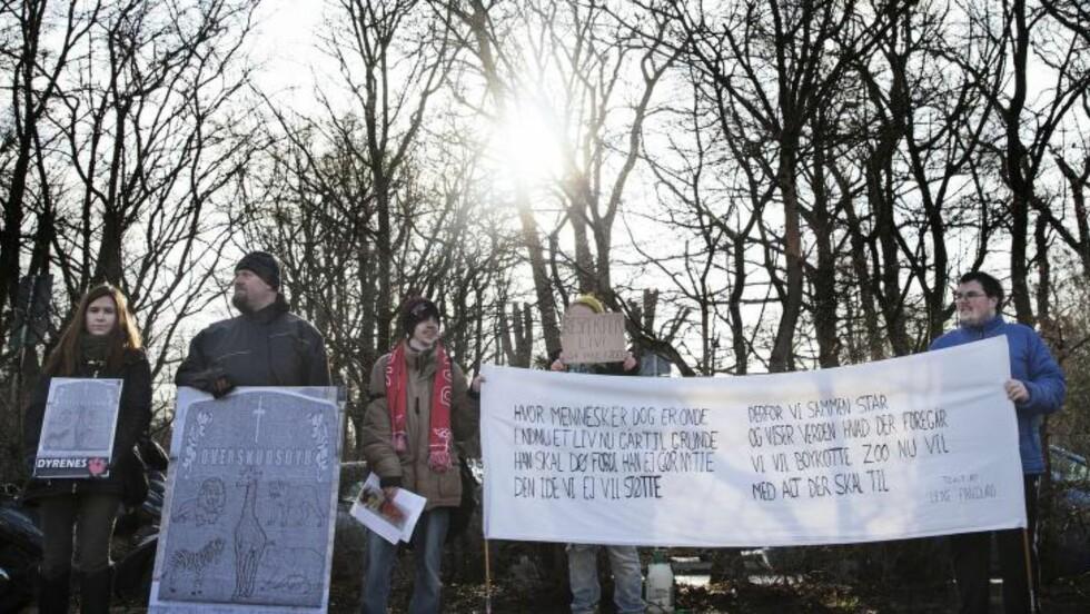 <strong>DEMONSTRERTE:</strong> Rundt 20 personer hadde møtt opp utenfor dyreparken i København for å demonstrere mot avlivingen av den friske sjiraffungen Marius. Foto: AFP Photo/Kasper Palsnov/NTB Scanpix