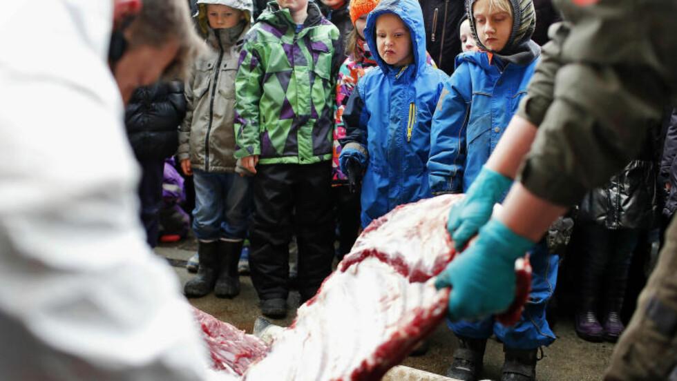 <strong>TILSKUERE:</strong> Flere barn overvar obduksjonen av sjiraffen. Etter obduksjonen var ferdig ble en del av kjøttet matet til løvene i dyreparken. Foto: AP Photo/Polfoto/Rasmus Flindt Pedersen/NTB Scanpix