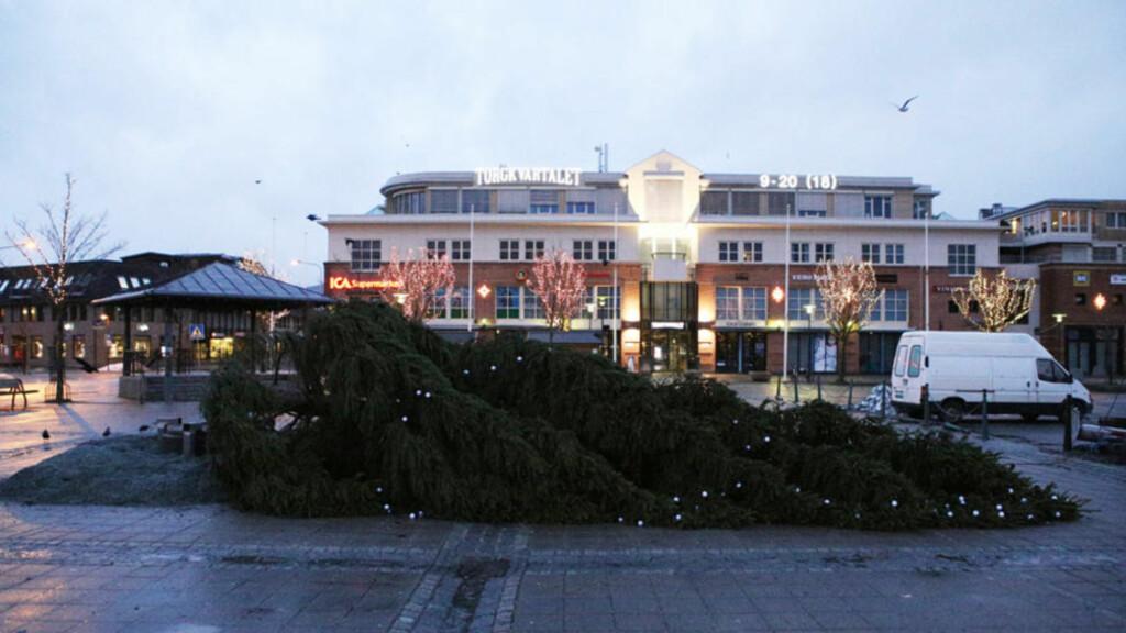 FEIL VEI: Julegrana som etter planen skal tennes klokka 16 i dag, knakk og falt som følge av sterk vind i natt. Arrangøren håper å kappe treet mindre eller erstatte treet i tide. Foto: Tor Aage Hansen