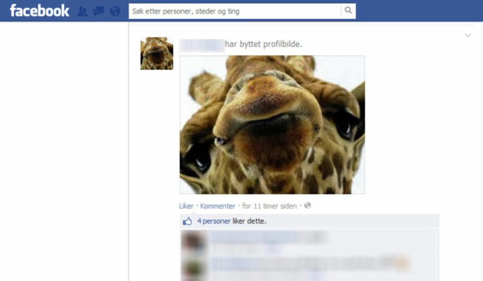 SJIRAFFBILDE: Straffen for å svare feil på en gåte som spres på Facebook, er å bytte profilbilde til en sjiraff. Skjermdump: Facebook