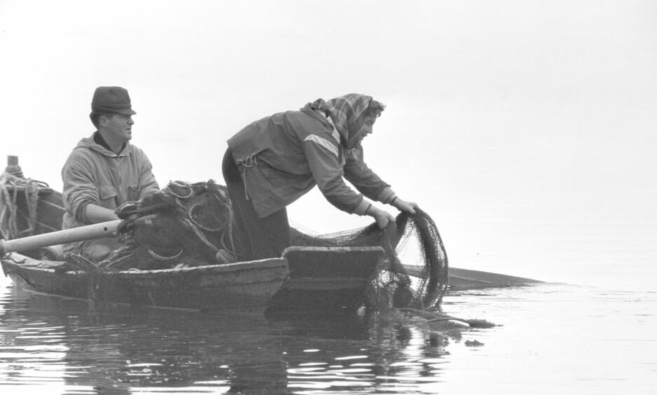 FISKE I ROBÅT: For to hundre år siden var robåtene viktige for verdiskapingen. Nå bidrar roboter til å skape verdier, skriver Nikolai Astrup. Her fra fiske av lagesid på Mjøsa i 1964, en kjærkommen ekstrainntekt for mange bønder på den tida. Foto: Aage Storløkken / Aktuell / Scanpix