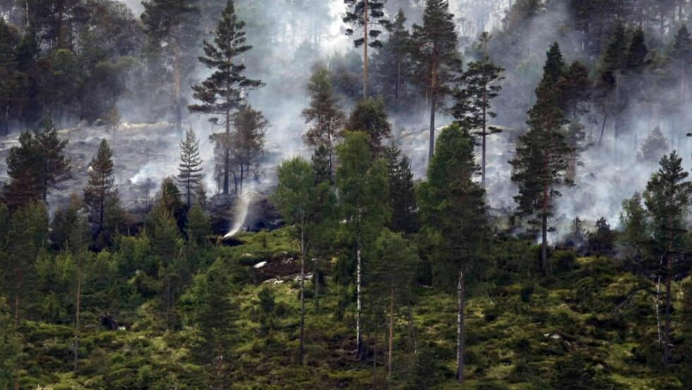 SVIDD SKOG: Forsvaret bisto i slukningarbeidet under den store skogbrannen i Froland i Aust-Agder i juni 2008. Foto: Tor Erik Schrøder / NTB Scanpix