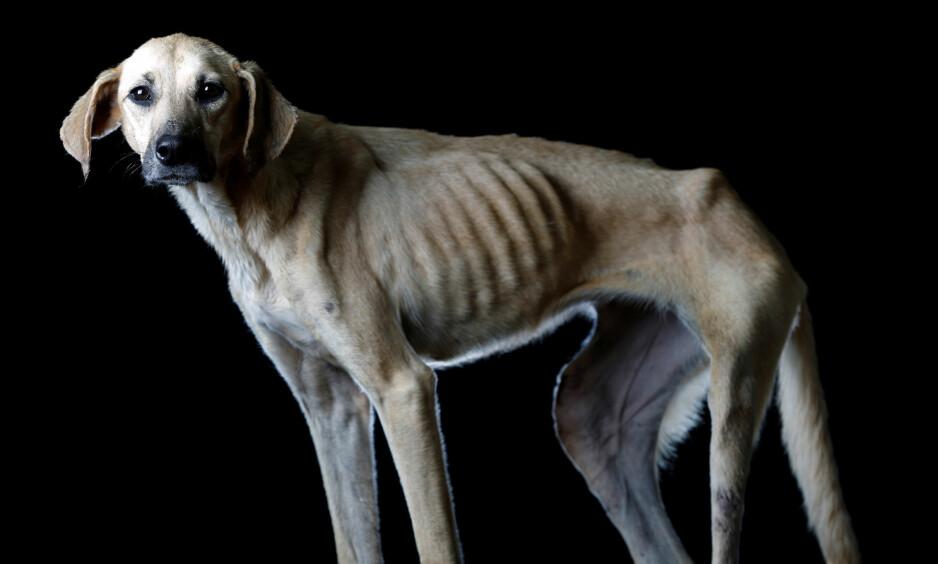 BOLIBOMBA: Denne hunden, som har fått navnet Bolibomba, kom til hundepensjonatet for to år siden, og lider under den økonomiske krisen. Foto: REUTERS/Carlos Garcia Rawlins/ NTB Scanpix.