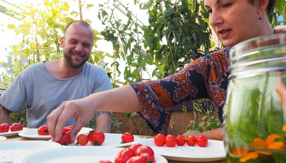 CHERRYTOMATER: De er små, røde og runde, men langt fra alle har den gode, søte og saftige tomatsmaken. Kokk Knut Lake og Tatiana de Sèves fra Parkens Grøde har hjulpet oss å smake på 20 småtomater.