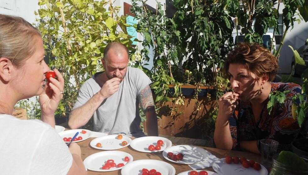 DUFT, UTSEENDE, SMAK, TEKSTUR: Alle tomatene er nøye vurdert.