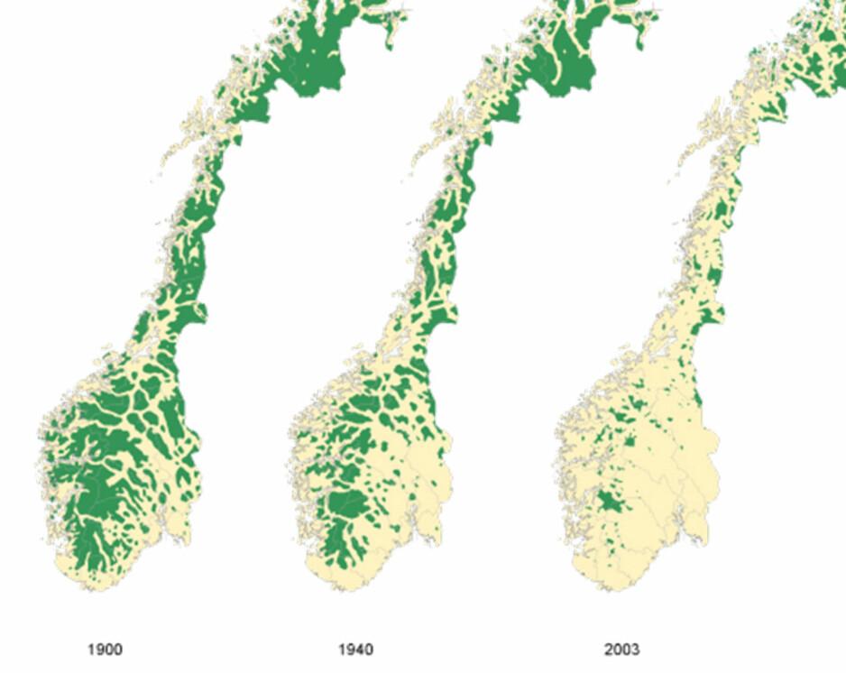 FORSVINNER: Bildet viser hvordan inngrepsfri natur har forsvinnet i Norge fra 1900 til 2003.
