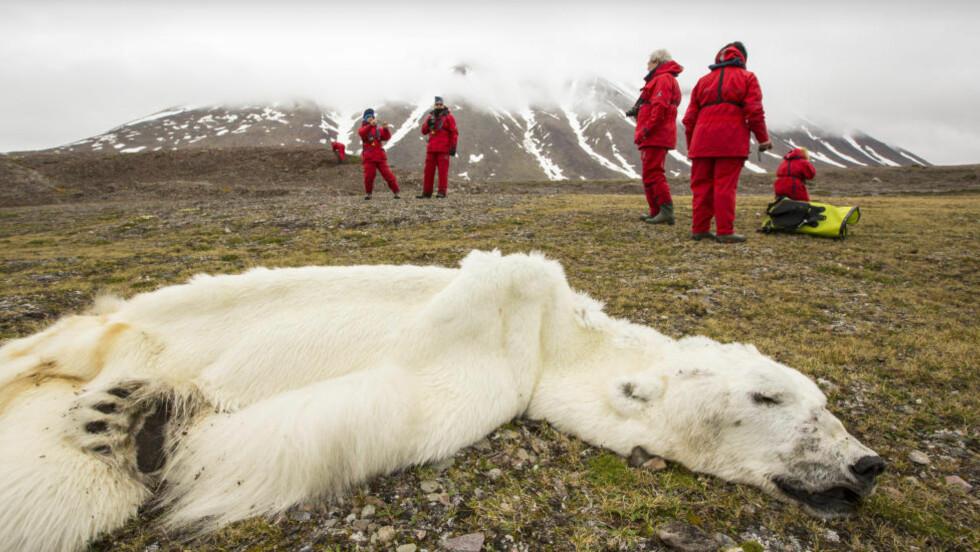 «SJOKKBILDET»: Bildet av en utmagret og død isbjørn på Svalbard har gått verden rundt. Foto: Ashley Cooper / Global Warming Images