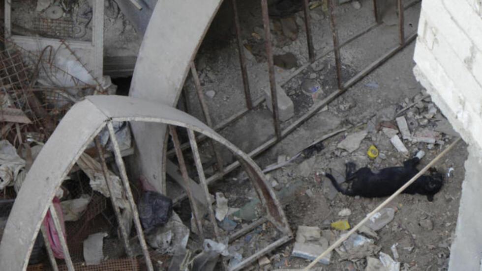 DØD:  Her ligger en hund død i området som skal ha blitt utsatt for onsdagens angrep. Foto: Reuters/Bassam Khabieh/NTB Scanpix