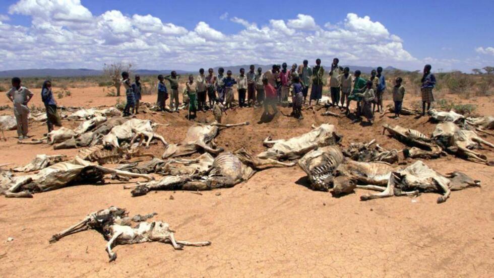 EKSTREMTØRKE: En gruppe etiopiere står ved siden av dyr som har dødd av tørke i 2000. Ny forskning viser at forurensning fra Europa og USA delvis har skyld i de store tørkene i Afrika på 80-tallet. Foto: Joel Robine / EPA / AFP Photo