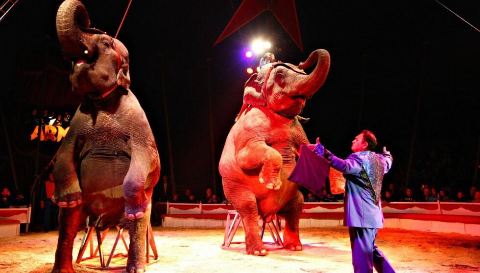 TRADISJON: Hvorfor går NOAH så hardt ut mot dyr i sirkus, spør artikkelforfatterne. Cirkus Arnardo har hatt elefanter i stallen i en årrekke, men det er ingen elefanter i årets show. Foto: Rolf Øhman / Aftenposten / NTB Scanpix