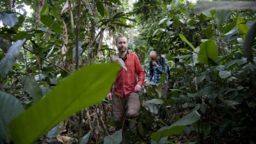 <strong>Apesafari:</strong> Bård Vegard Solhjell (SV) besøker regnskogen i Malebo. Der jobber WWF for å bevare de utryddingstruede bonebo-apene. Foto: Tore Bergsaker