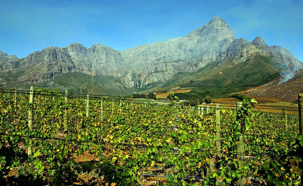 VINLAND I VEKST: Stadig flere sørafrikanske produsenter konsentrerer seg nå om vin i det øvre sjiktet. De har stort fokus på å finne de rette druetypene til rett terroir, som viser landets potensial som vinland. Foto: TORBJÖRN SELANDER