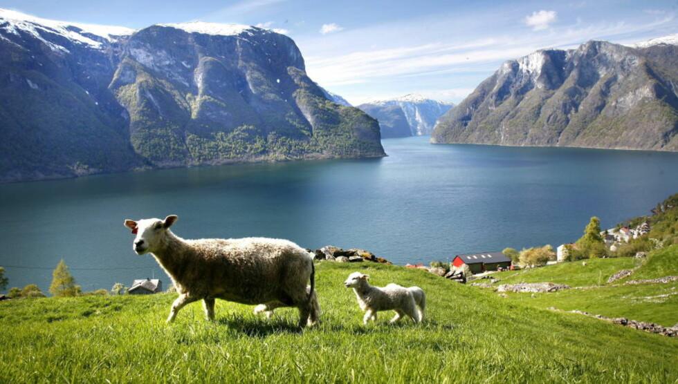 TYPISK NORSK Nordmenn har en «erotisk naturpatriotisme» - som jeg aldri har sett maken til, skriver Nina Witoszek. Aurlandsfjorden i Sogn og Fjordane.   Foto: Geir Bølstad