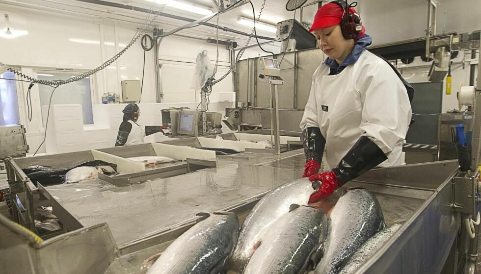 VEKSTNÆRING: Eksport av varer og tjenester fra sjømatnæringen har økt kraftig de senere årene, og norske eksportører må ikke ha dårligere rammevilkår enn våre konkurrenter, skriver kronikkforfatteren. Foto: Terje Bendiksby / NTB Scanpix