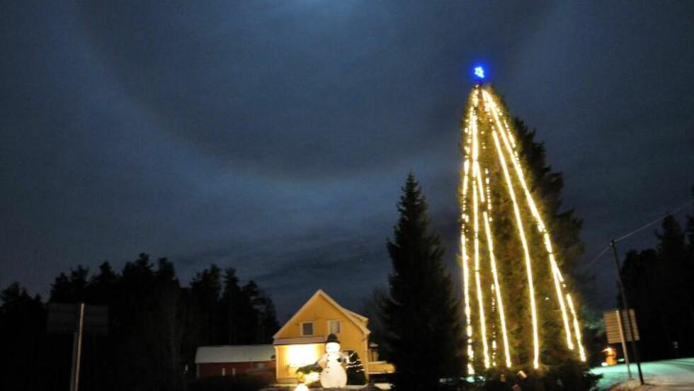KLATRA TIL TOPPS:  Kjell Rune Strømstad (34) klatra i toppen av treet i hagen sin, og fikk plassert julelyselenkene ved bruk av fiskestang. Til tross for at fjorårets strømregning kom på 3000 kroner, mener han lyspyntinga er verdt det. Foto: Privat