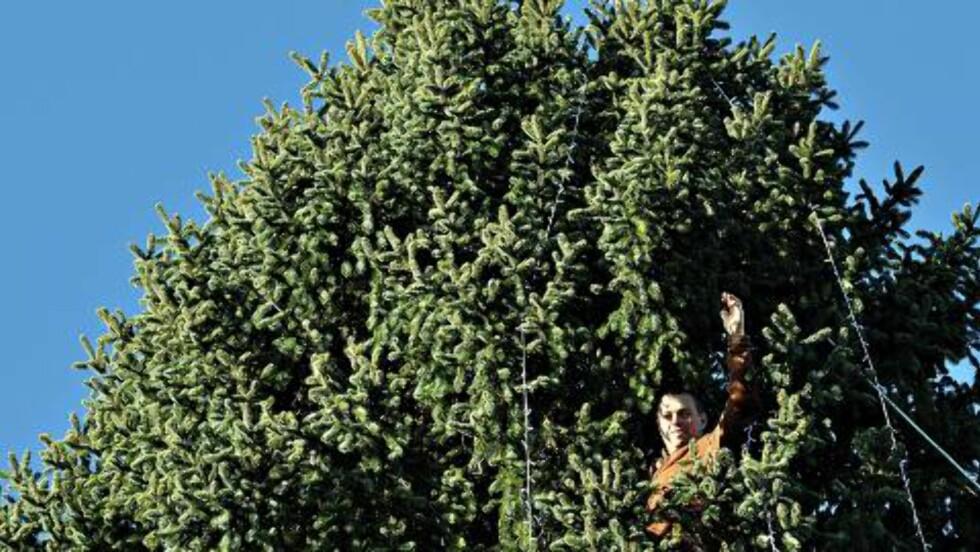 KLATREMUS:  Kjell Rune Strømstad (34) har sjøl klatret til toppen av treet sitt for å henge opp lysene. Foto: Privat