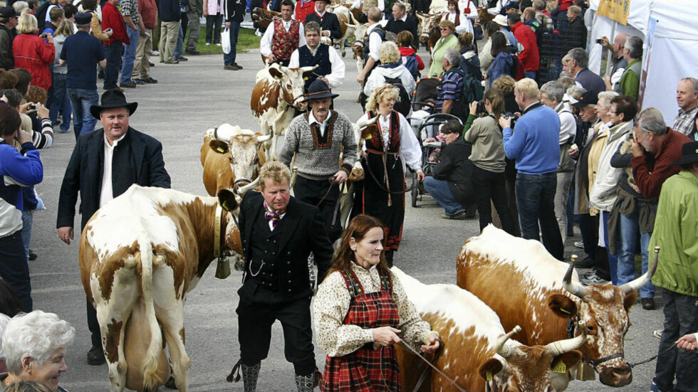 FOLKEFEST: Dyrsku'n fylles med folk og fe.         Foto: DYRSKU'N