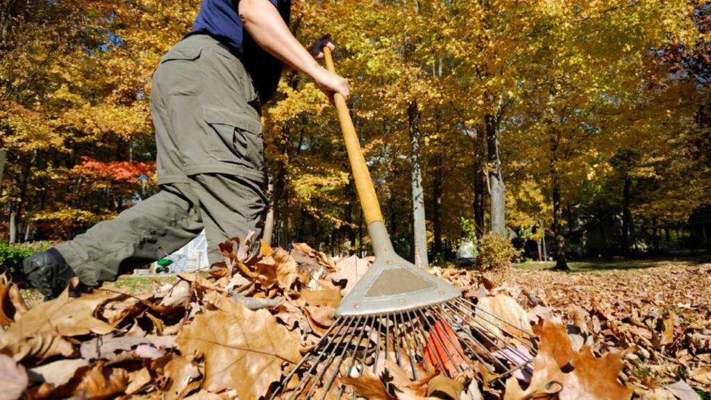 LURT OG LETTVINT: Rak løvet, men la det ligge og kjør gressklipperen over, er ett av rådene om smarte ting å gjøre i hagen om høsten. Foto: Istock