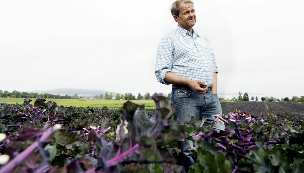 TOTENVIKA: Ned mot Mjøsa dyrker bonde Per Odd Gjestvang mange kålsorter. Her står han mellom stenglene til årets rosettkål, en nyhet har lanserte i fjor. Foto. KRISTIN SVORTE