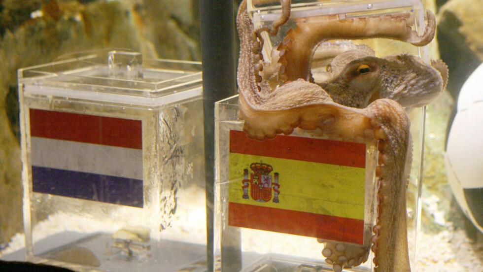 LEGENDE: Blekkspruten Paul døde i 2010, måneder etter suksessmesterskapet i Sør-Afrika. I VM tippet Paul riktig resultat i syv kamper på rad, sjansen for det er 1/256. Foto: SCANPIX/AFP/PATRIK STOLLAR