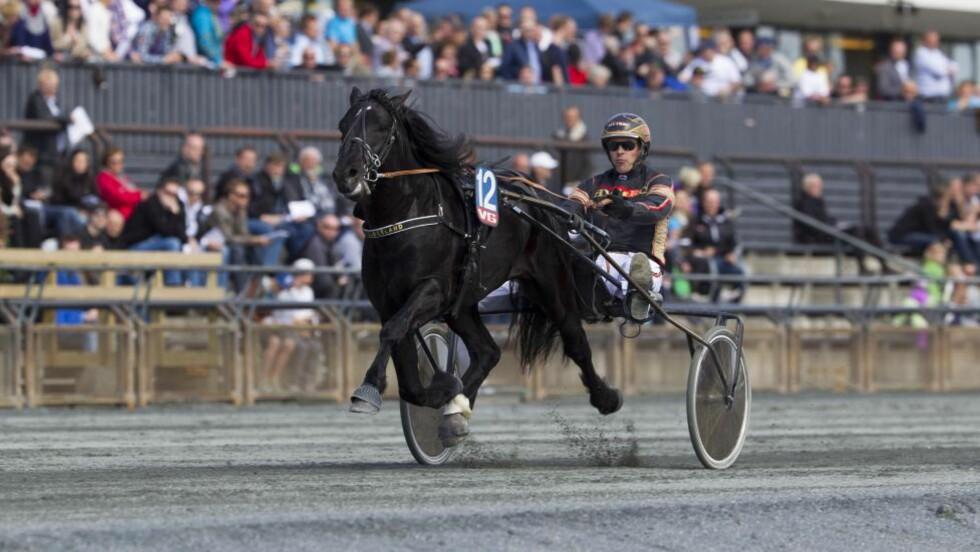 STORTALENT. Kjetil Djøseland overlater ingenting til tilfeldighetene med Norheim Svenn foran lørdagens V75-løp på Leangen. Foto: HESTEGUIDEN.COM.