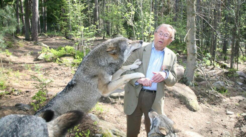 ANGREP:  Arne Weise er sjokkert over nyheten om at en ung svensk kvinne er drept av de samme ulvene som angrep han selv for fem år siden. Foto: Leif Hallberg/Expressen