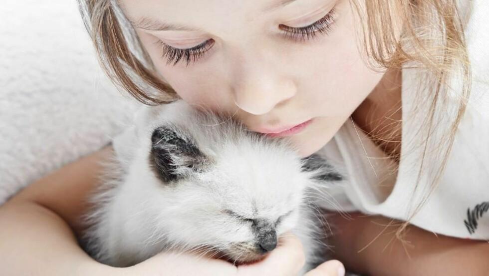DYREALLERGI: Flest barn er allergisk mot katt. Allergenene til en katt er mye mer klebrige og setter seg lettere fast både på klærne og kroppen til kattens eier enn hundehår. Foto: IStockphoto