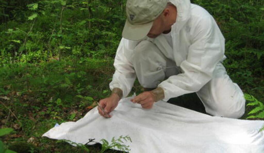 FORSKER PÅ FLÅTT: Her har forskere samlet inn flått i skogen, og putter dem på prøveglass for å frakte dem tilbake. Foto: Folkehelseinstituttet