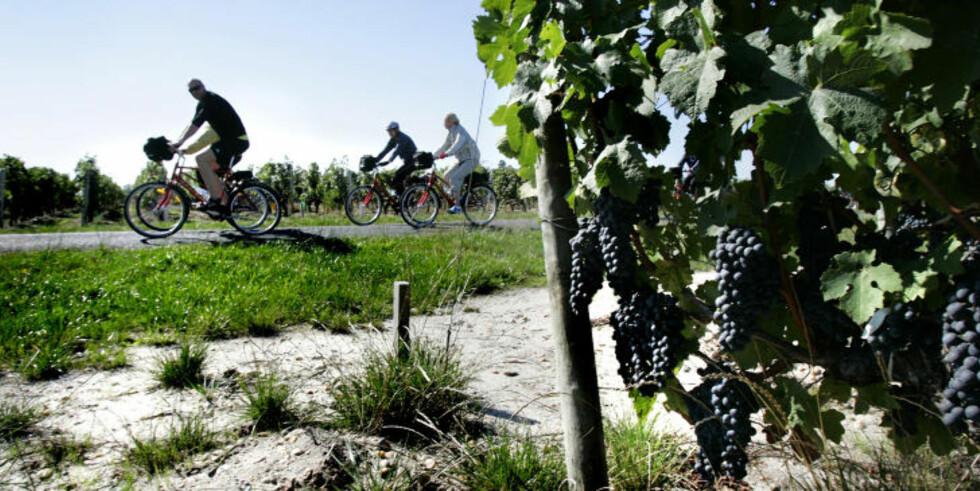 FLATT: Bordeaux har hentet fram sin fordums storhet. Vinområdene ligger i et flatt landskap, som er godt egnet for sykling. Foto: GEIR BØLSTAD