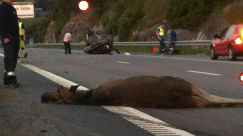 HAVNET PÅ TAKET: Bilen rullet rundt og landet på taket etter et kraftig sammenstøt med en elg. Foto: Arne Hoem/Dagbladet